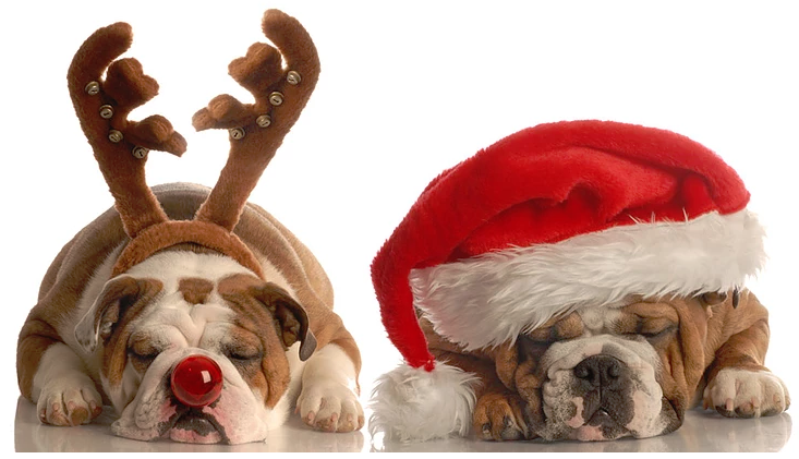 The Meaning of Christmas to Your Dog