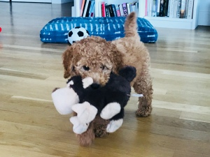A Puppy and a Toy Monkey